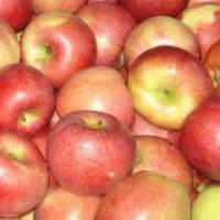 Федеральная служба по ветеринарному и фитосанитарному надзору запретила ввоз в Россию американского арахиса и яблок из Сербии