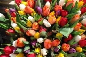 В столице России торгуют опасными для здоровья цветами