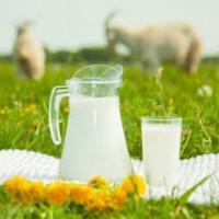 Козье молоко для детей: состав, польза, когда можно, как правильно выбирать и хранить