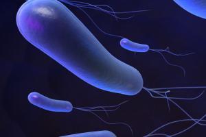 Хеликобактериоз: лечение, диагностика, методы