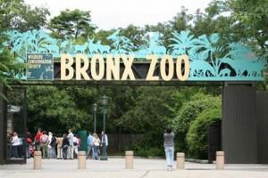 Лучшие зоопарки мира для детей