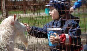 В зоопарк с ребенком: правила поведения. Что взять с собой в зоопарк