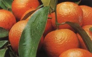 Мандарины при беременности. Можно ли мандарины во время беременности: отзывы